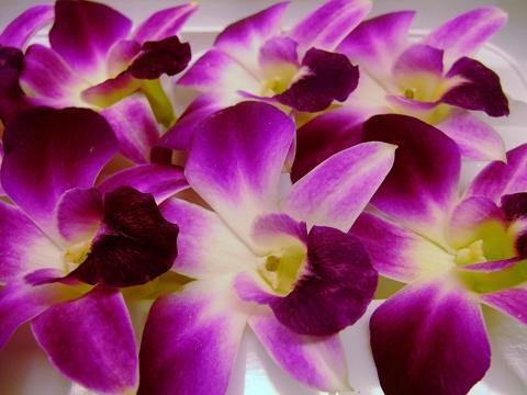 飾りに サラダに 本日の目玉 フレッシュ エディブルフラワー デンファレ 1パック8個入り 安全 入荷不確実 食用花