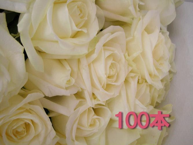 【18%OFF】 白いバラの花束 100本 結婚式 送料無料 生花(お祝い プレゼント ばら 品 薔薇 古希 還暦祝い フラワーギフト 男性 女性 誕生日 結婚祝い 結婚記念日 結婚式 ボリューム バレエ発表会 喜寿 喜寿のお祝い 品 古希 お花 敬老の日 お誕生日 通販 バレンタイン お返し ホワイトデー お返し), LIT-SHOP:0009ad60 --- business.personalco5.dominiotemporario.com