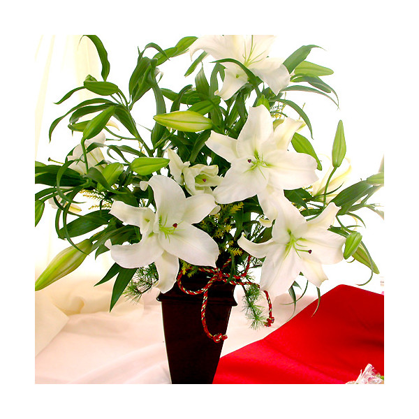 new year new years flowers white lily fresh flowers flower holiday gifts new year flowers new year arrangement new year greetings