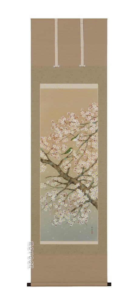 掛け軸/掛軸 桜に小鳥(鈴木 秀湖)【送料無料】【代引手数料無料】