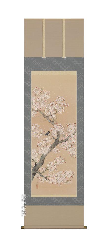掛け軸/掛軸 桜に小鳥(浅井 新明)【送料無料】【代引手数料無料】