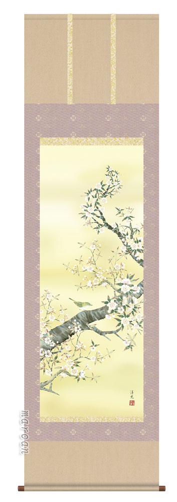 掛け軸/掛軸/かけじく【花鳥画】桜花(井川 洋光)【送料無料】【代引き手数料無料】