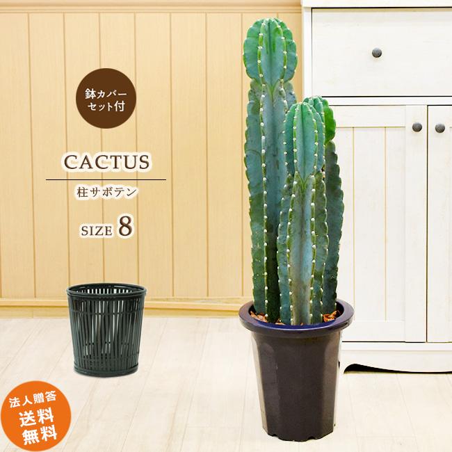 柱サボテン 3本立ち 中型8号(竹の鉢カバーI付き) 鉢カバーセット 観葉植物 おしゃれ 送料無料