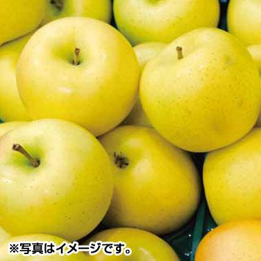 品質検査済 人気の製品 りんご 林檎 お自宅用 予約 Iコース 長野県産シナノゴールドりんご5kg 11月上旬~中旬出荷