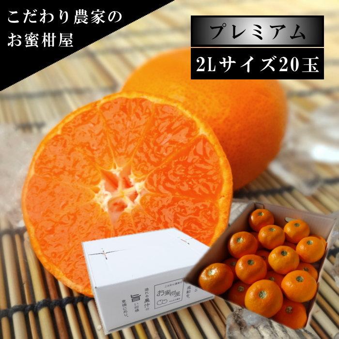 超激得SALE 極上柑トロのお蜜柑 蜜ツ星プレミアム 白のギフト箱 おトク 2Lサイズ 初取り果実20玉入