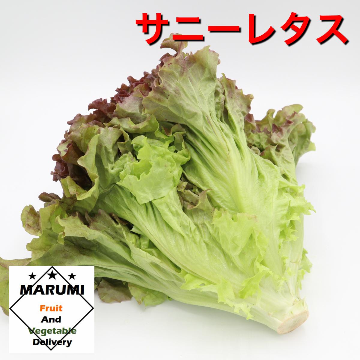 安心 安全の野菜をお届けします サニーレタス1束 セット野菜と同時購入で送料無料 静岡 茨城 再再販 春の新作続々 千葉 長野