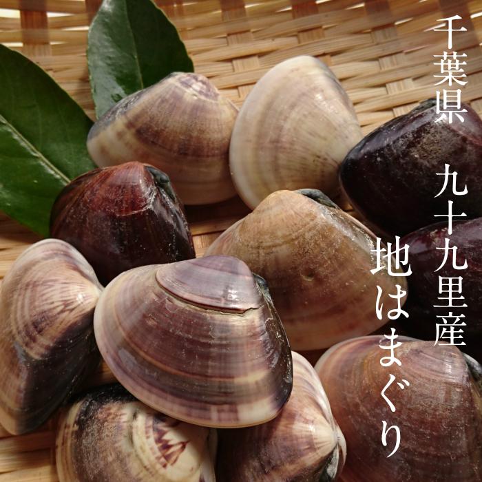 九十九里産 (約12個) 大はまぐり 冷凍ハマグリ (ボイル蛤) 1Kg