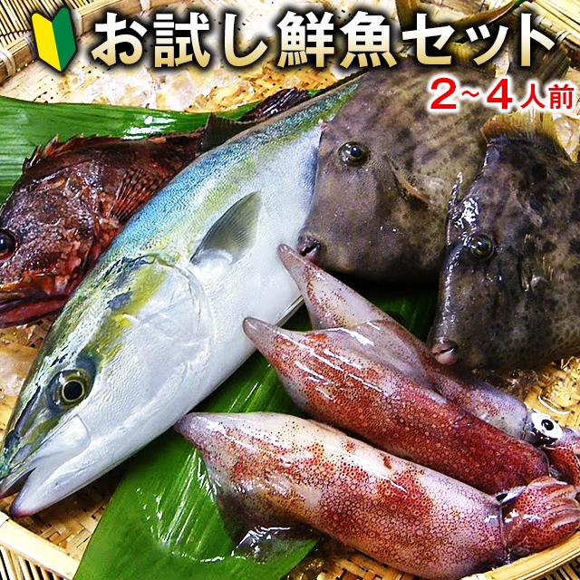 五島列島の鮮魚お試しセット