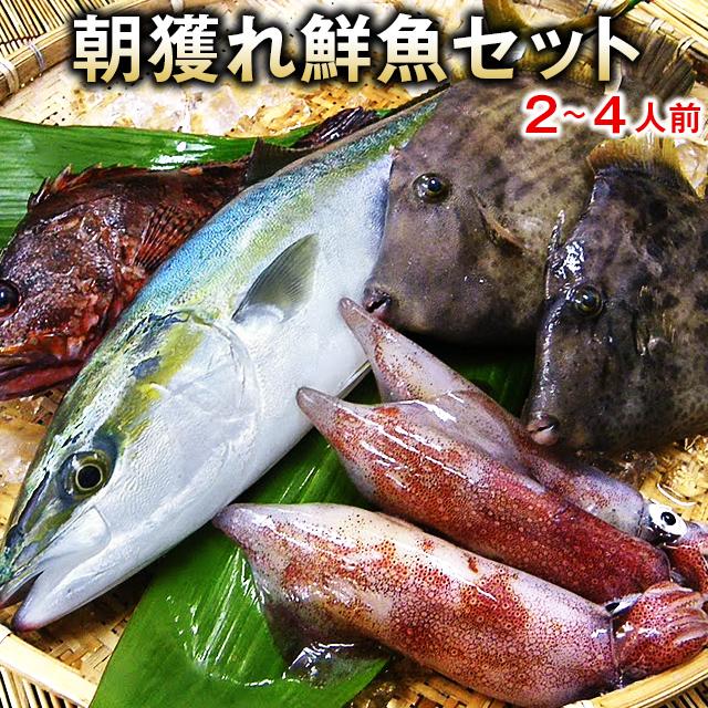 五島列島の鮮魚通常セット
