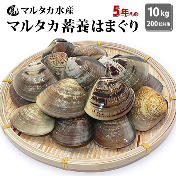 【送料無料】【業務用】大人買い蓄養はまぐり 5年もの5cm~6cmサイズ蛤(ハマグリ)10kg(200粒前後)入♯貝 はまぐり ハマグリ 蛤 バーベキュー 海鮮 海鮮バーベキュー 直送