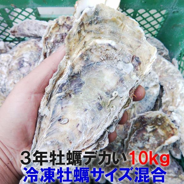牡蠣の本場松島より完全漁師直送です 生出荷の際はカキランキング 殻付き 独占させていただいておりました 30%クーポン有の新商品 デカい牡蠣 牡蠣 あす楽対応 3年牡蠣 10kg 冷凍便 送料無料 10キロ 宮城県産 殻付き牡蠣 無選別牡蠣 SDGs 松島牡蠣屋 母の日 定番キャンバス 父の日 牡蠣通販 牡蛎 お中元 BBQ バーベキュー食材 高級 カキ 海産物 殻付 お歳暮 加熱用