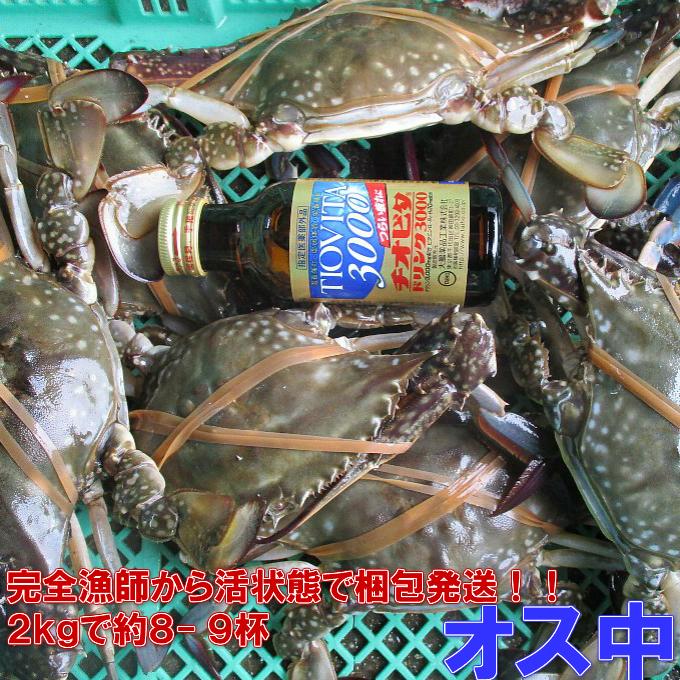 ワタリガニ オス中サイズ 渡り蟹 ガザミ 梭子蟹 ケジャンにも!活発送 2kg(約8-9杯)送料無料 カンナ屑梱包 活到着補…