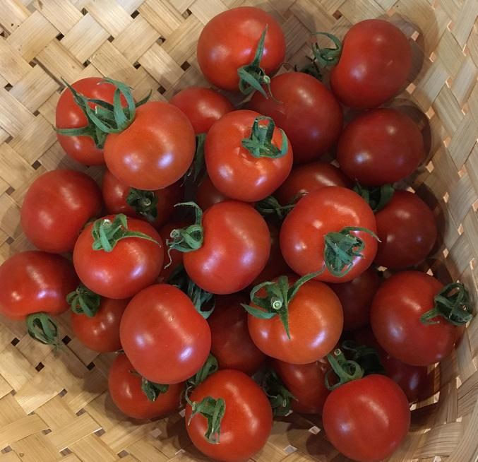 ビタミンやミネラル 全国一律送料無料 食物繊維など豊富 ミニトマト 三重産 開催中 野菜セット同梱で送料無料