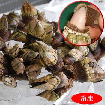 珍味 亀の手 カメノテ 冷凍 値引き 小中サイズ 500g 初回限定 浜坂産 ペルセベス