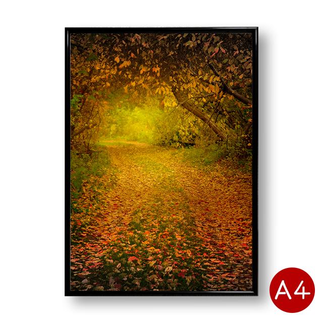お部屋を華やかに彩るA4ポスター メール便送料無料 A4ポスター 秋の森林 No.2 インテリア 自然 風景 ポイント消化 送料無料 壁飾り 写真 アートポスター 当店は最高な サービスを提供します 景色 今ダケ送料無料