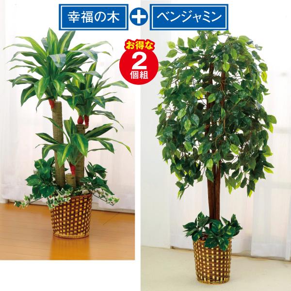 光触媒お手軽観葉植物2個組