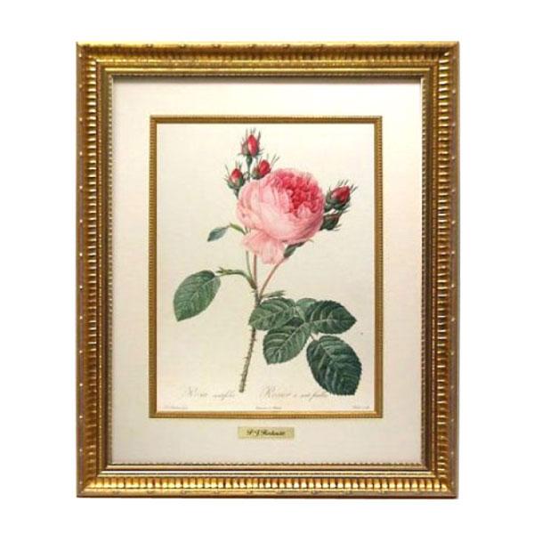 お得なクーポン配布中 【取り寄せ】ルドゥーテ 複製画シリーズ バラ図譜 フォリオ版 原寸大 ゴールドフレーム 木製ライナー 真鍮プレート 絵画 Redoute 薔薇 ローズ バラ Rose オクノブ