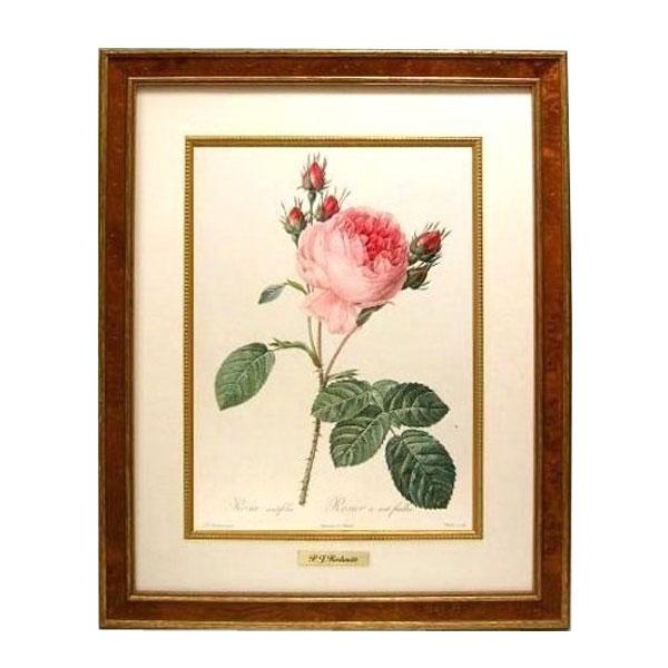 お得なクーポン配布中 【取り寄せ】ルドゥーテ 複製画シリーズ バラ図譜 フォリオ版 原寸大 銘木調フレーム 木製ライナー 真鍮プレート 絵画 Redoute 薔薇 ローズ バラ Rose