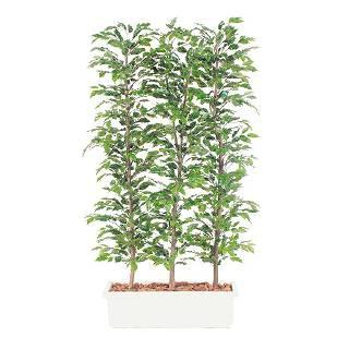 【まとめ買い10個セット品】 SG ベンジャミナパーテーション E21038 1.5m【 人工樹木 作り物 】【 店舗備品 造花 造木 】