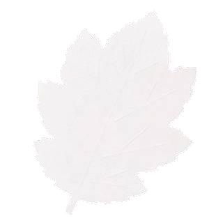 【まとめ買い10個セット品】 葉形耐油天紙 291-K (200枚入)