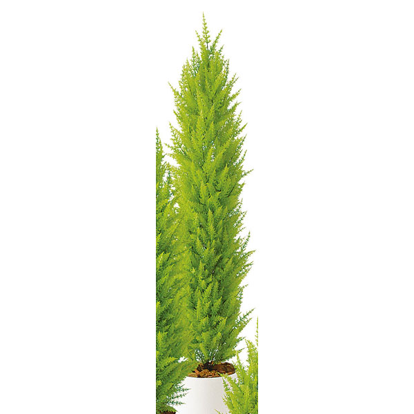 SG ゴールドクレストツリー 90633 1.8m 【人工樹木 作り物】【メイチョー】