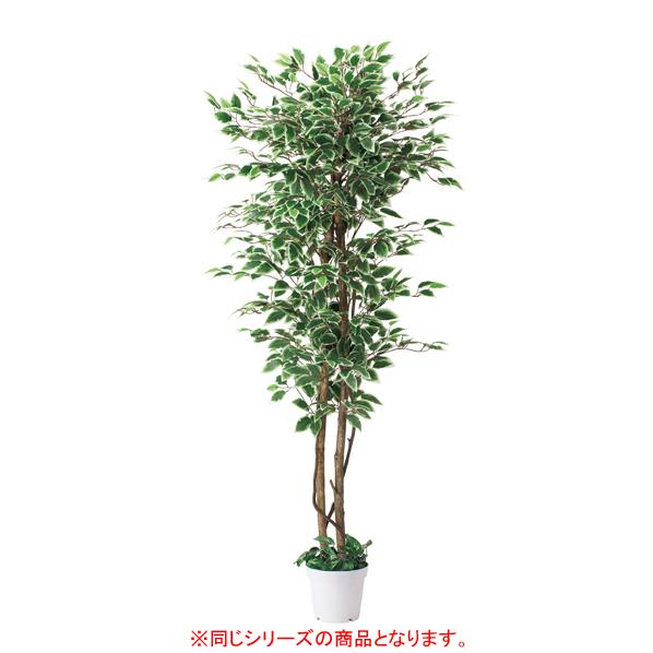 【まとめ買い10個セット品】 立ち木(人工樹木)ベンジャミングリーン 【厨房館】