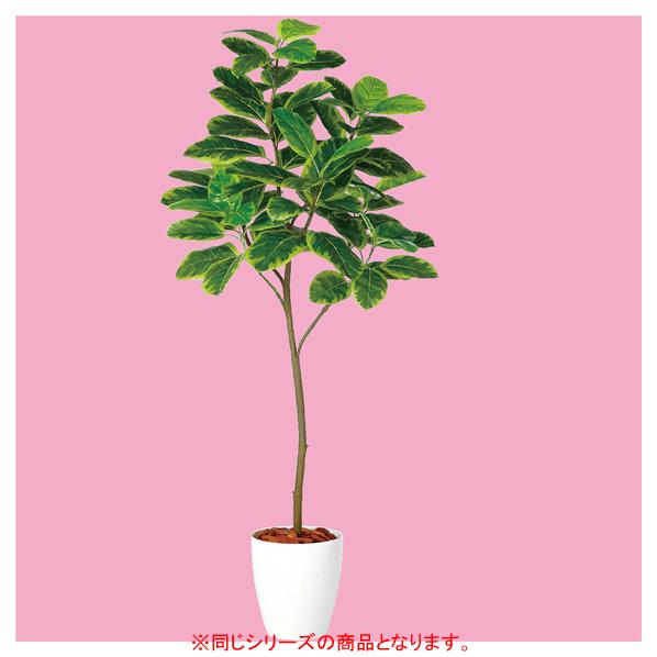 【まとめ買い10個セット品】 アルテシマ(人工樹木) H150cm1台 【厨房館】