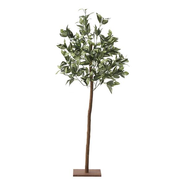 【まとめ買い10個セット品】 トラディスカンティア立ち木1台 【厨房館】