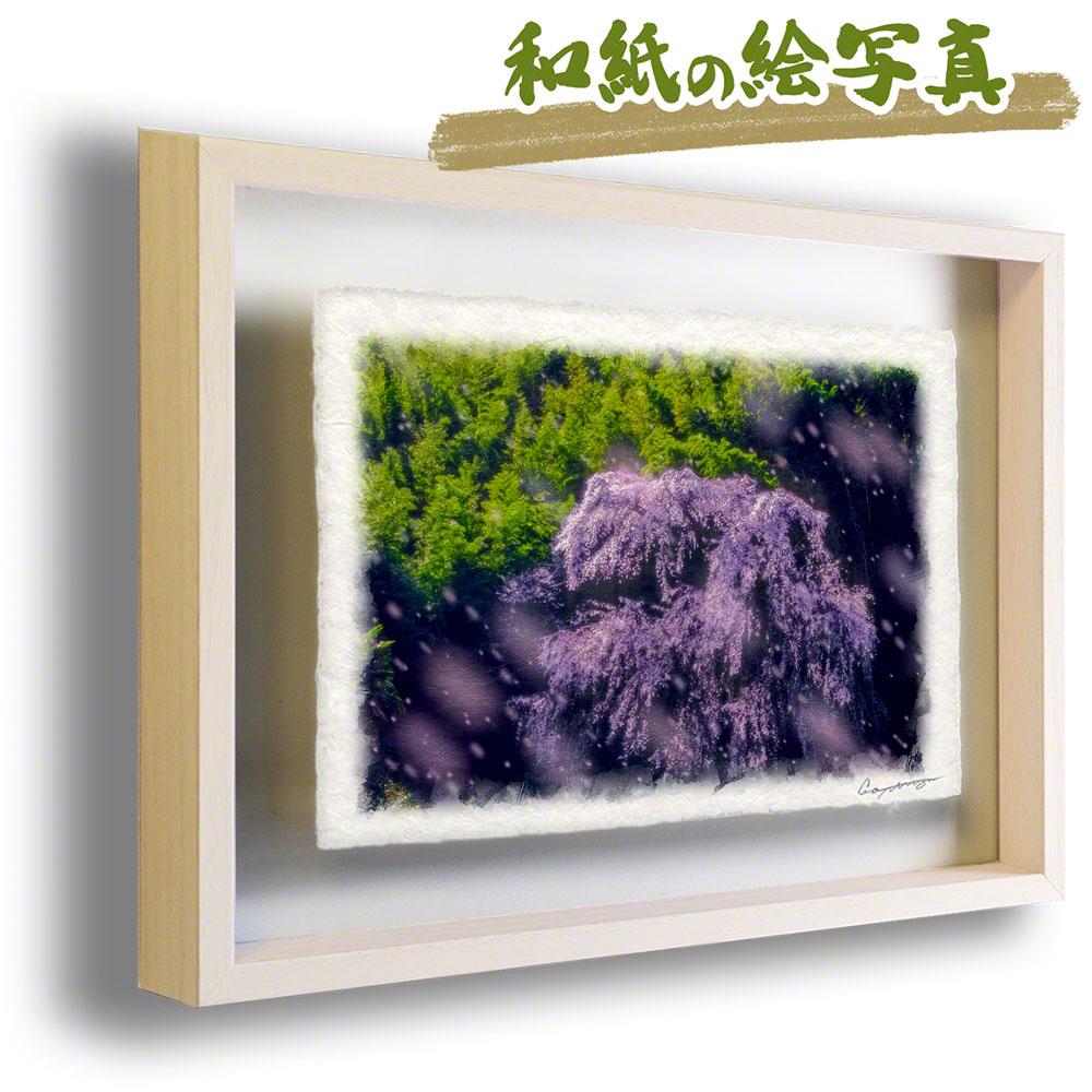 絵画のような写真のような優しい風合い。風景のグラフィックアートを和紙にプリントして額縁に。 絵画 インテリア おしゃれ 壁掛け 風景画 和紙 アート フレーム 27x20cm 花 春 ピンク 「輝く竹林としだれ桜」