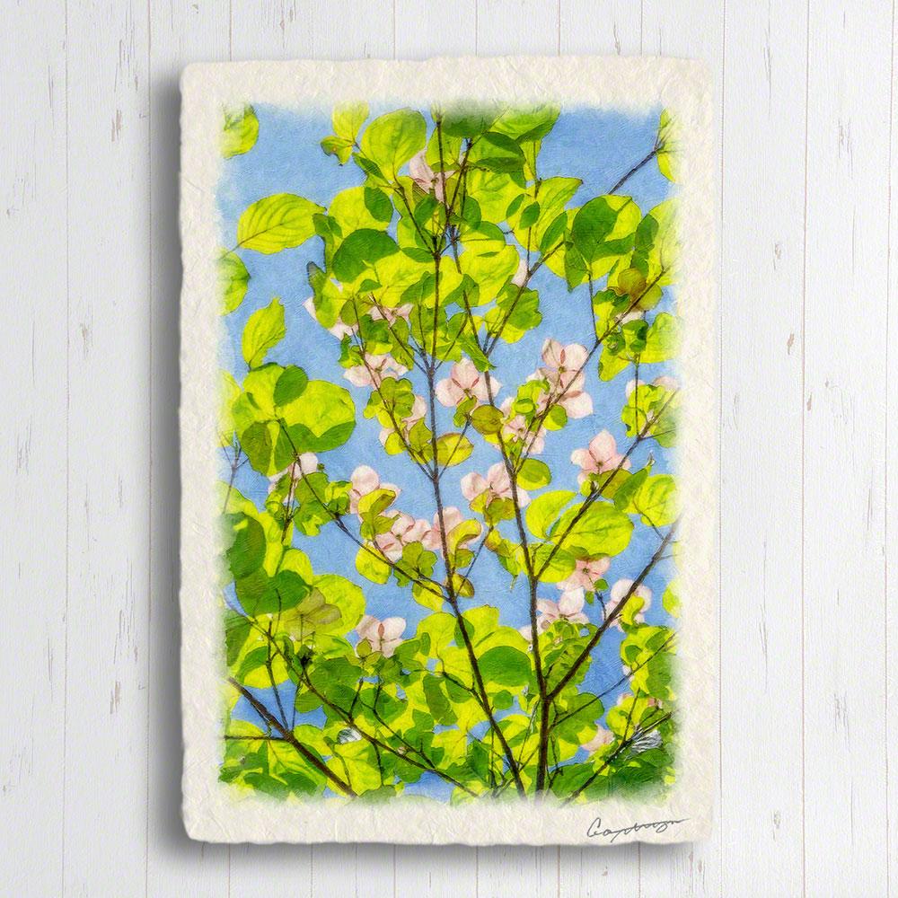 絵画のような写真のような優しい風合い 風景のグラフィックアートを和紙にプリントしてポストカードに 絵画 インテリア おしゃれ 壁掛け 風景画 和紙 花 15x10cm AL完売しました。 青空とヤマボウシの白い花と若葉 ポストカード 商店 木 緑 春