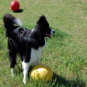 小型犬 中型犬 大型犬のおもちゃ 室内 室外でも遊べる犬のおもちゃ 送料無料限定セール中 エッグ レッド色 egg 訳あり品送料無料 特価セール