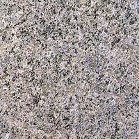 【送料無料】天然御影石規格タイルカレドニア 磨き600×300×13(5枚入り)