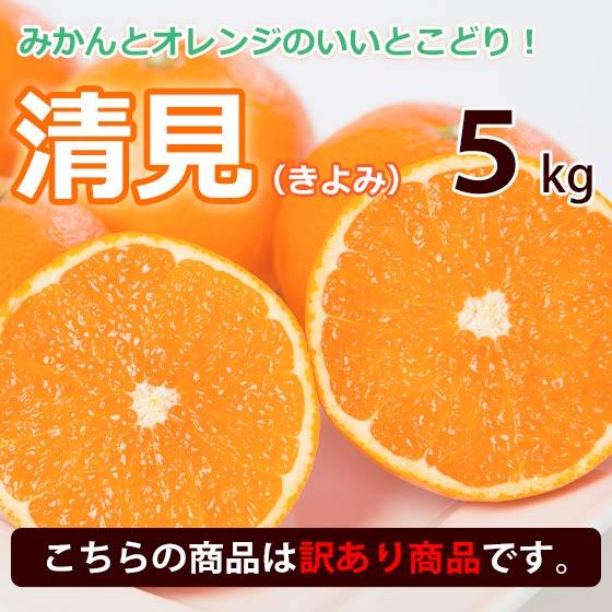 【訳あり】清見オレンジ 清見タンゴール 西宇和地区八幡浜市産 約5kg