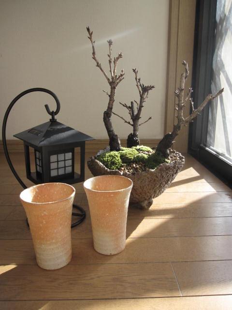 桜の盛り合わせランタン式 ソーラー ライトで 夜桜セット開花は毎年 4月中頃桜の寄せ植え開花時期 四月初旬~中頃  桜 盆栽:桜の盛り合わせ2020年花芽付の桜盆栽となります。 夜桜炎彩フルセット桜盆栽