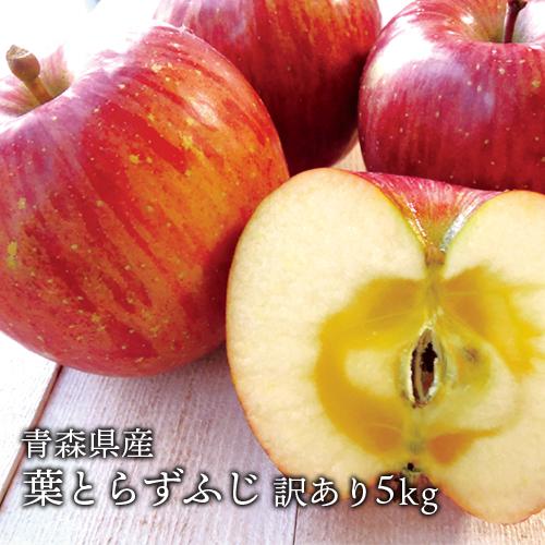 見た目よりも味重視 ジューシーなりんごの王様葉とらずふじ産地直送でお届け 新品 送料無料 送料無料 青森県産 葉とらずふじ ご家庭用5kg 青森産 激安超特価 訳あり 約14~18個 サンふじ 人気の訳ありリンゴ