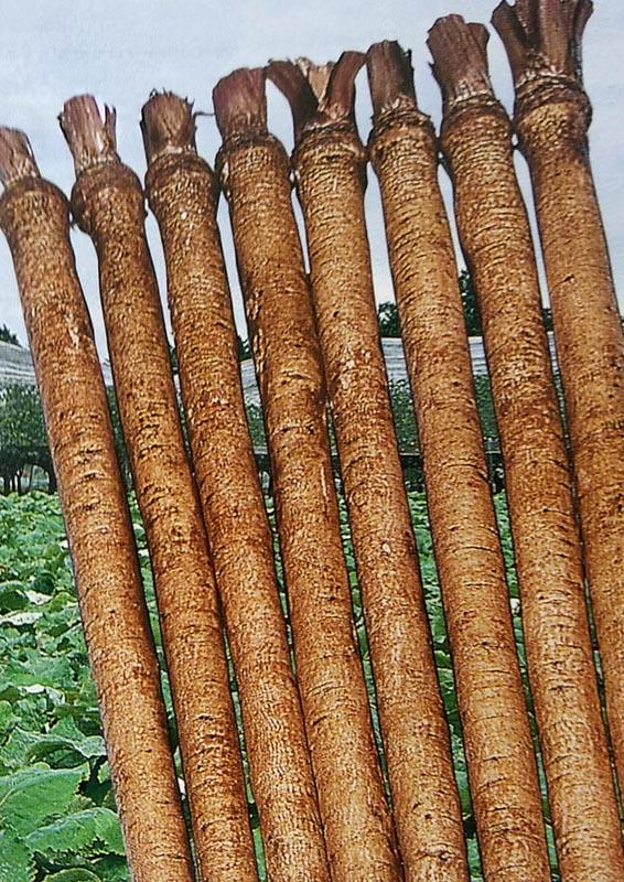 白肌で太りの良い ゴボウ種 格安SALEスタート 東北理想ゴボウ 1L 栽培用 種子 ごぼう種 牛蒡種 正規品 生産者向け
