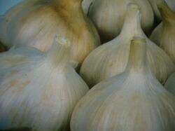 にんにく種香川県産にんにく 1kg栽培用