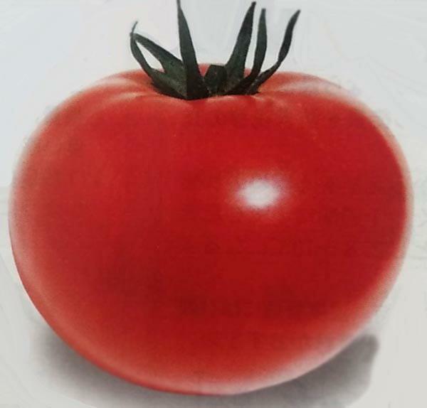 冬春栽培用の代表格 人気海外一番 トマト種 ハウス桃太郎 1000粒 生産者向け 種子 半促成栽培用 激安挑戦中 栽培用