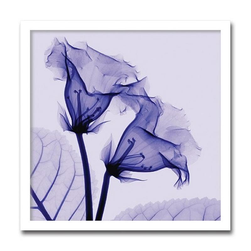 【クーポン配布中】アートパネル X-rey 写真 Gloxinia グロキシニア 花 アートフレーム 玄関に飾る絵画 おしゃれ 絵画 インテリア 壁掛け 額入り 額装込 リビング 玄関 額 プレゼント 額絵 ギフト ポスター 額入り 油絵