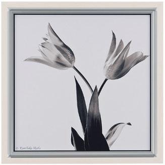 【送料無料】HIBELL ART(ハイベルアート)アートポスター・スマート写真アートシリーズ池田 邦彦/スタイリッシュフラワー 04 HS-7051作家作品や作品印象がグレード感を演出するインテリアアート