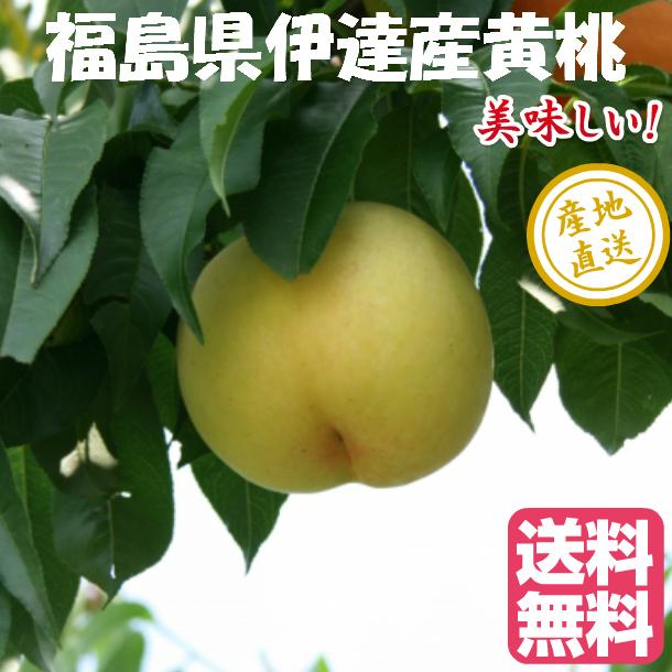 時期に採れた桃を発送します 冷蔵にて発送する場合があります 黄桃 2.7kgX2箱 8~12玉 福島県 伊達産 桃 黄貴妃 バーゲンセール もも 等 大人気 四国 九州は送料600円増し 北海道 黄金桃 中国地方は400円増しです