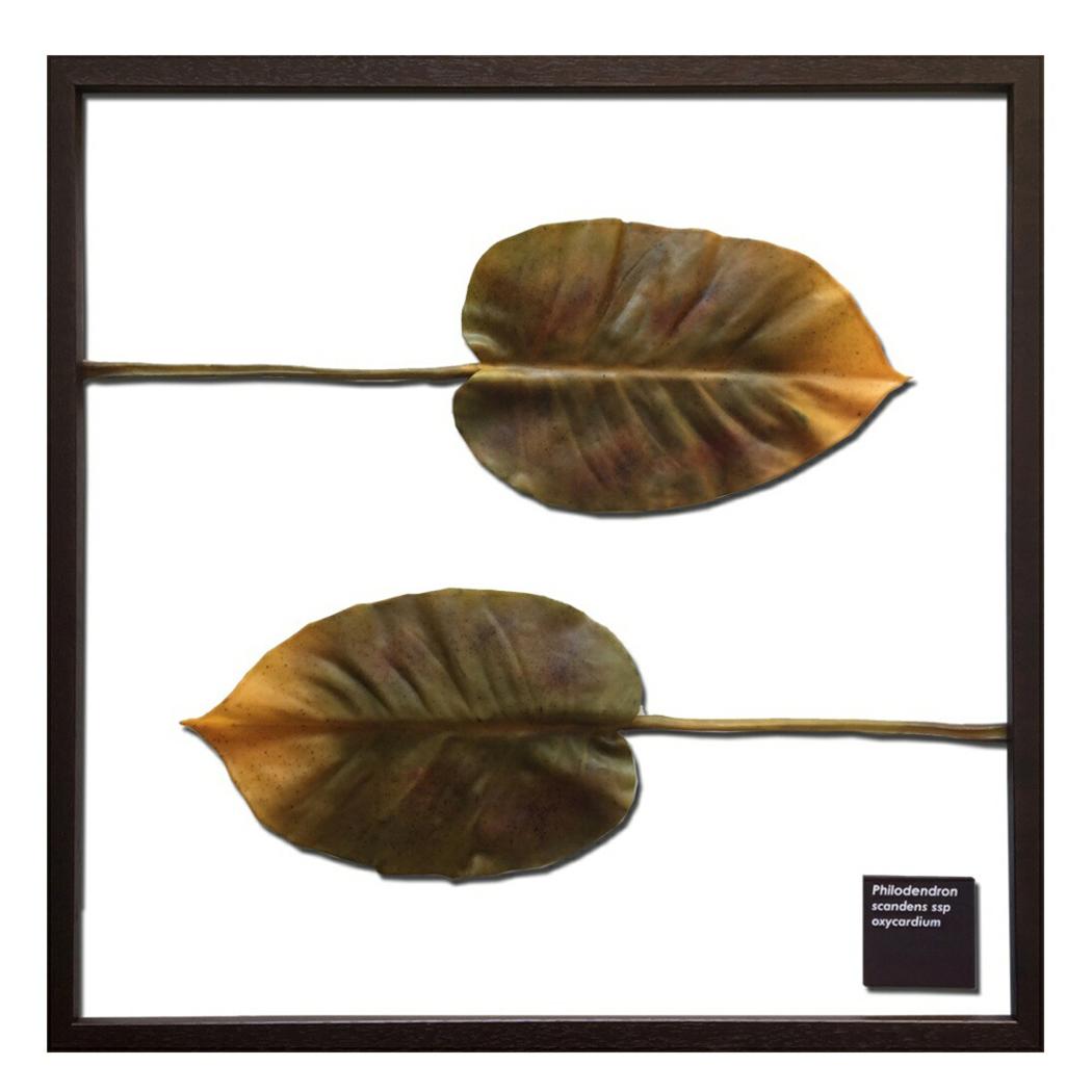 Philodendron scandens ssp.oxycardium フィロデンドロン F-style Frame リーフアートフレーム 美工社 62.5×62.5×3cm 造花 額付き インテリア 取寄品 マシュマロポップ
