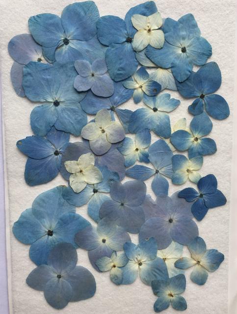 格安店 押し花材料 押し花素材 押し花アート ハンドメイド 手作り K-63 爆売り ミックス ブルー 押し花 アジサイ 40枚
