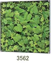 大感謝価格『薄型BOXフレーム ウォールグリーン 3562』『メーカー直送品。代引不可・同梱不可・返品キャンセル・割引不可』観葉植物 壁掛け ディスプレイ 飾る インテリア 雑貨 グッズ 薄型BOXフレーム ウォールグリーン 3562送料無料10P03Dec16