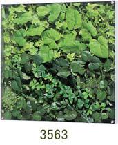 大感謝価格『薄型BOXフレーム ウォールグリーン 3563』『メーカー直送品。代引不可・同梱不可・返品キャンセル・割引不可』観葉植物 壁掛け ディスプレイ 飾る インテリア 雑貨 グッズ 薄型BOXフレーム ウォールグリーン 3563送料無料10P03Dec16