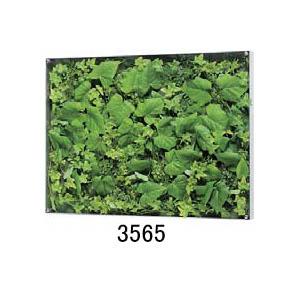 大感謝価格『薄型BOXフレーム ウォールグリーン 3565or3567』『メーカー直送品。代引不可・同梱不可・返品キャンセル・割引不可』観葉植物 壁掛け ディスプレイ 飾る インテリア 雑貨 グッズ 薄型BOXフレーム ウォールグリーン 3565or3567送料無料