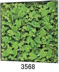 大感謝価格『薄型BOXフレーム ウォールグリーン 3568or3569』『メーカー直送品。代引不可・同梱不可・返品キャンセル・割引不可』観葉植物 壁掛け ディスプレイ 飾る インテリア 雑貨 グッズ 薄型BOXフレーム ウォールグリーン 3568or3569送料無料