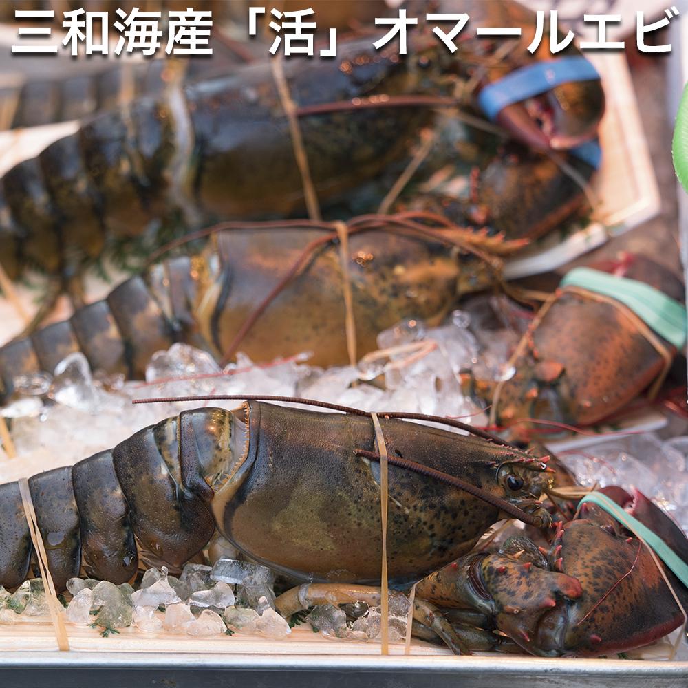 三和海産 オマール海老 500g 【活きた状態の出荷です】 (オマールえび、オマールエビ)