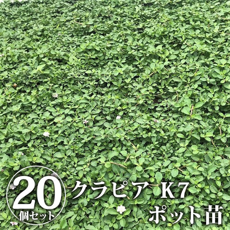 【送料無料】【クーポン利用で30%OFF】クラピア K7 ポット苗 20個セット