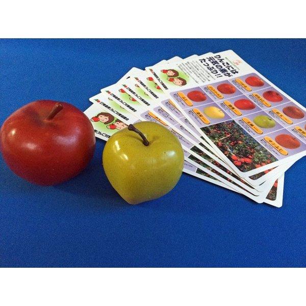 青森りんごセット 食品サンプル 税込 新色追加して再販 教材